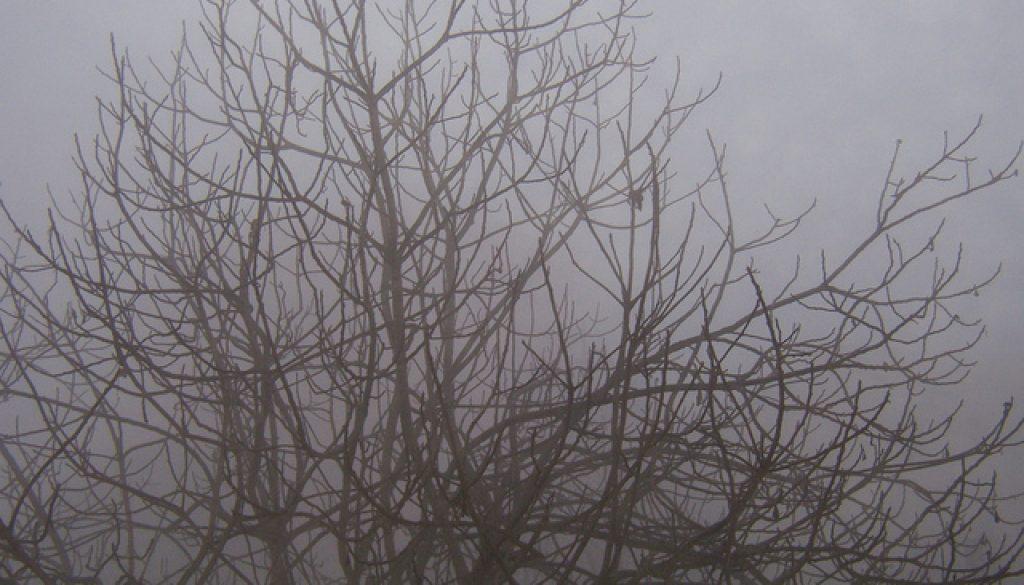 nebbia e fico: nulla