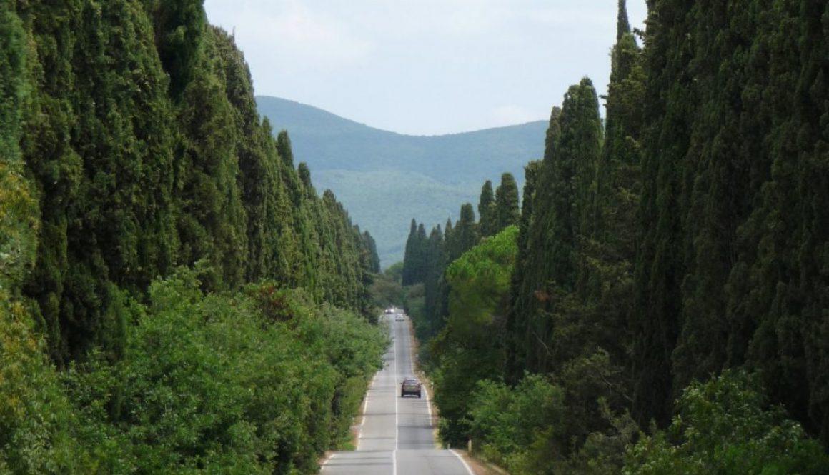 cipressi-toscani