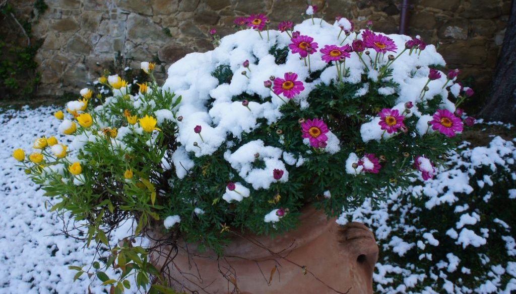 fiori e neve, la natura rinasce