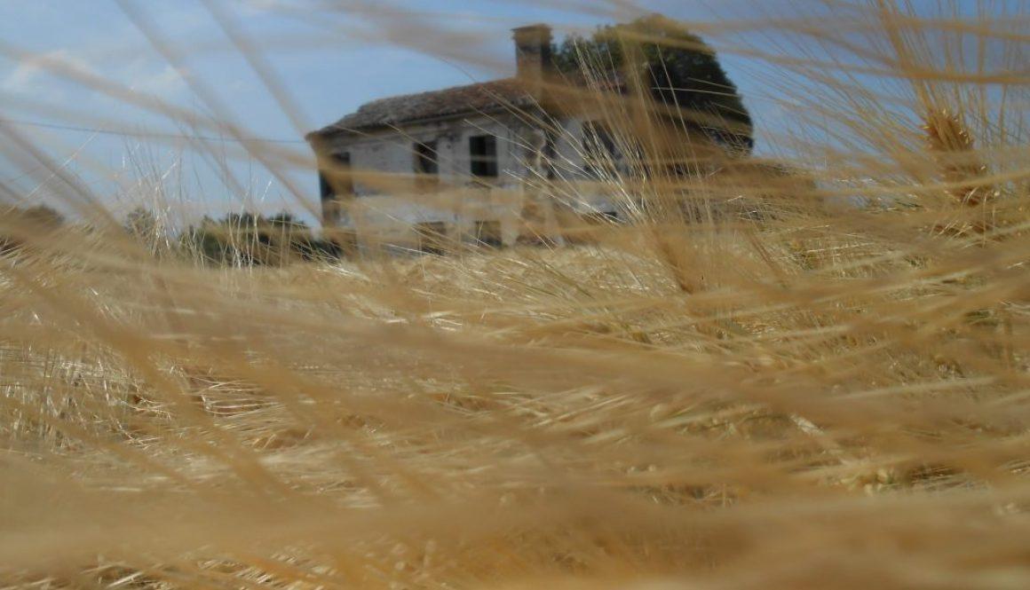 vento nei capelli - grano - polesine